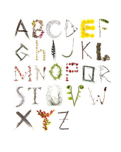 nature alphabet rerun