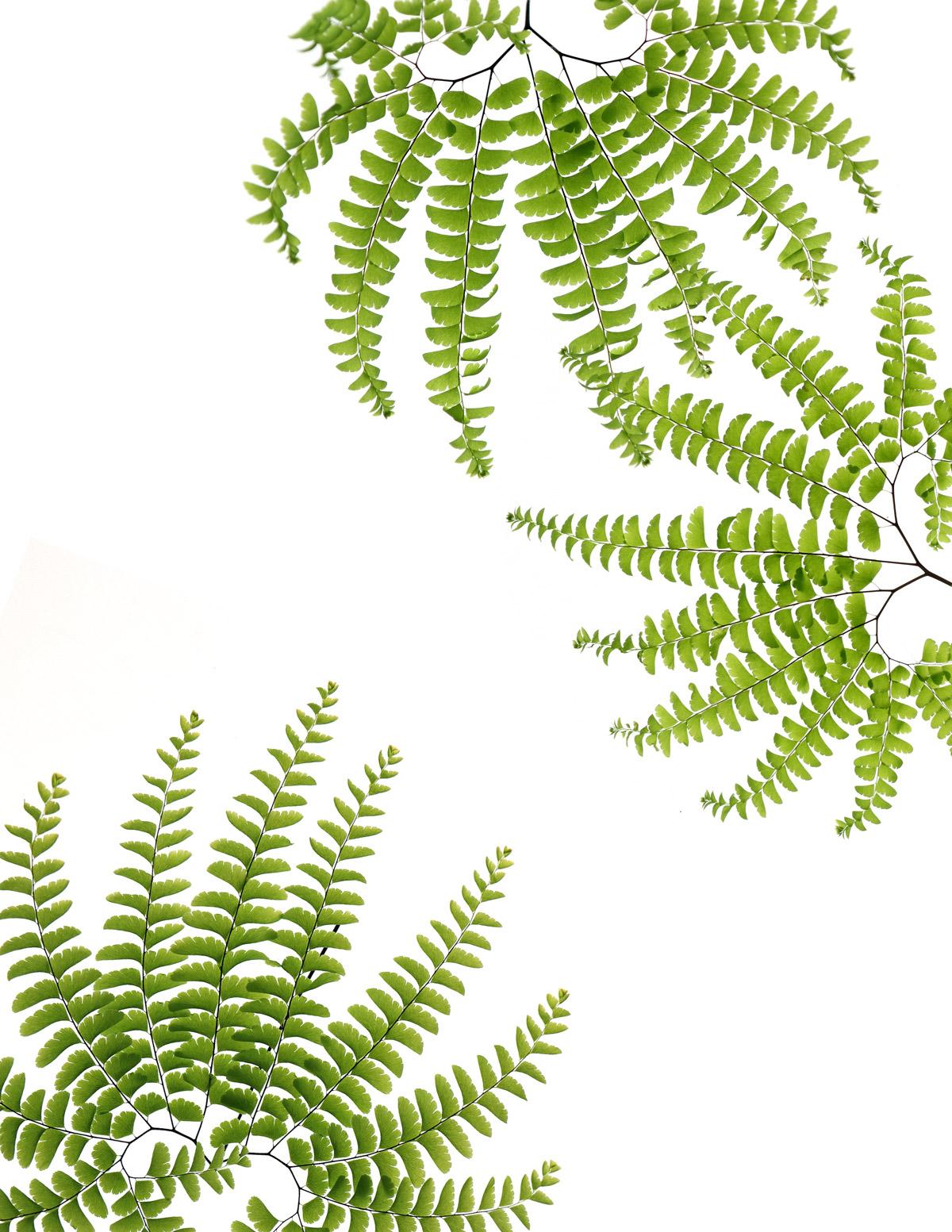 plant walk