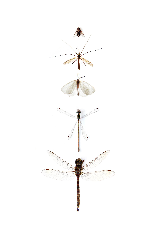 five flies