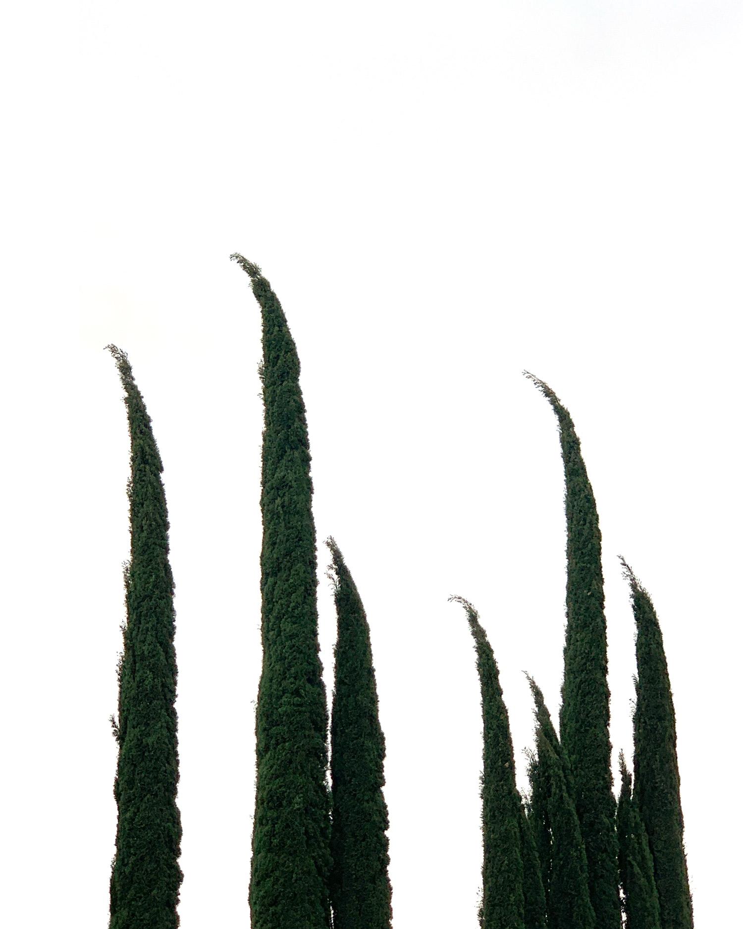 george clooney trees