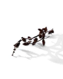 long prickly shadows