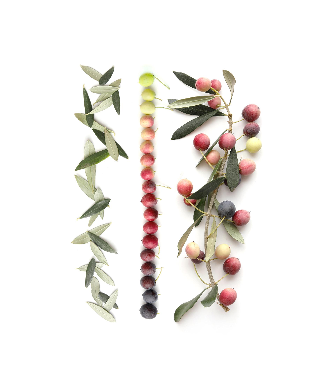 olive green (pink, rose, cranberry, cherry, plum, indigo, black)
