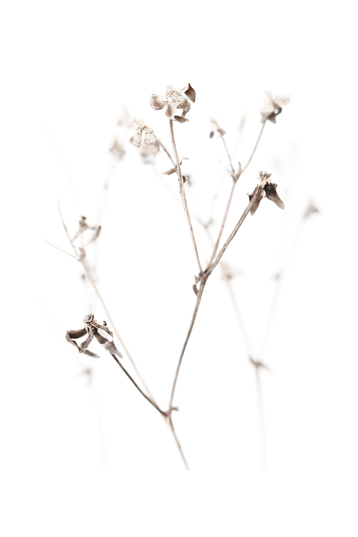 arthritic winter stems