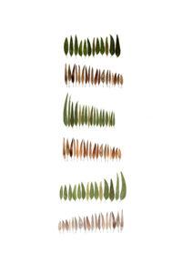 cypress-like