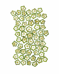 pentagons don't tesselate