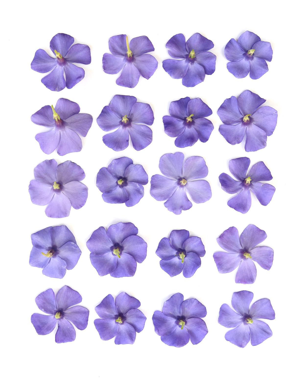 purple pinwheels