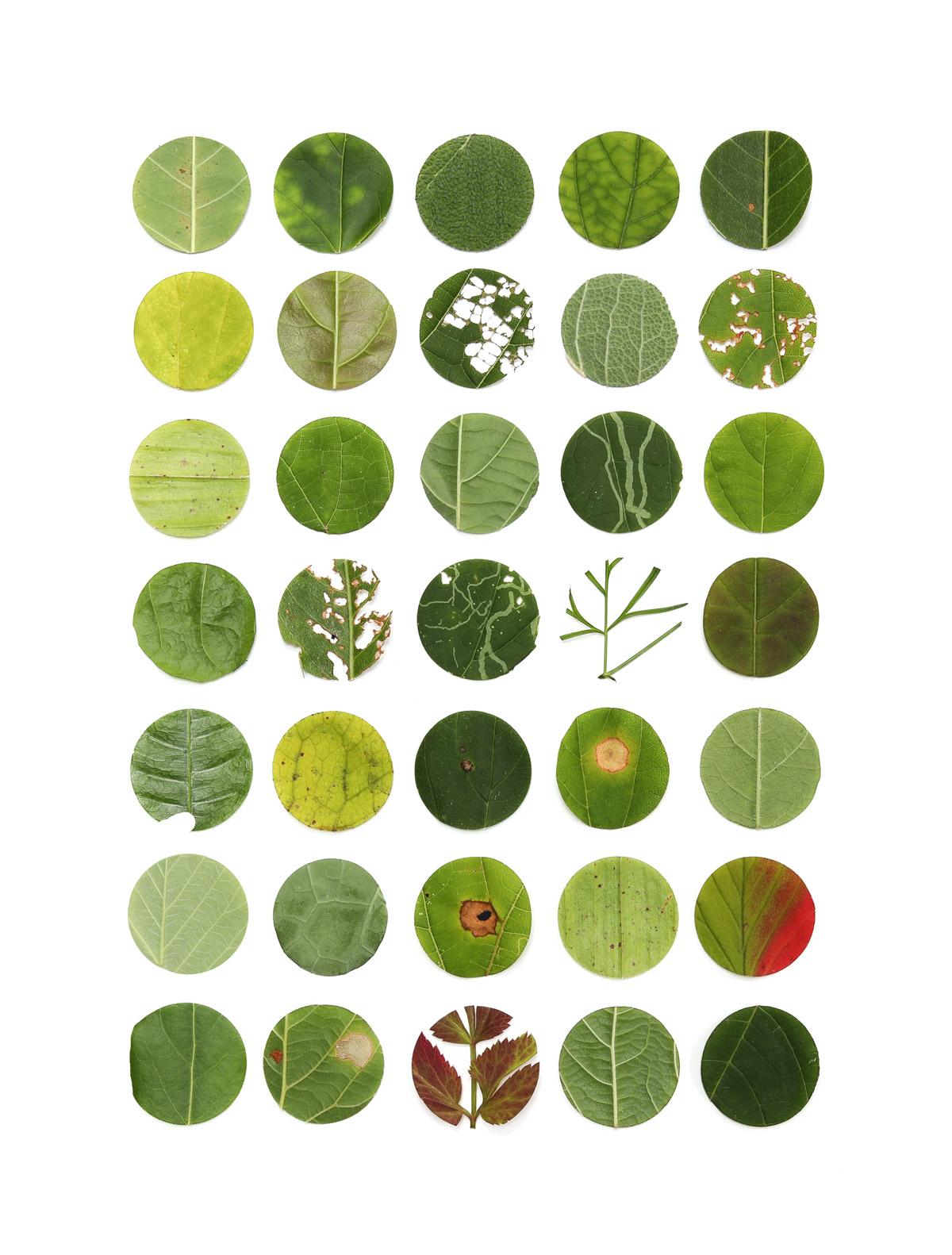 35 shades of green