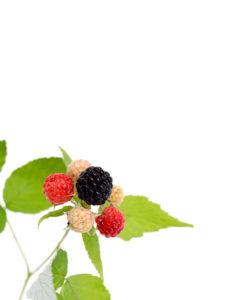 july is berry season
